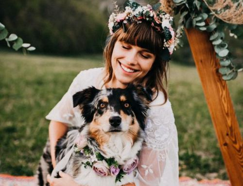 Paws for Thought:  Dogs at Weddings
